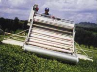 Magic Carpet Tea Harvester